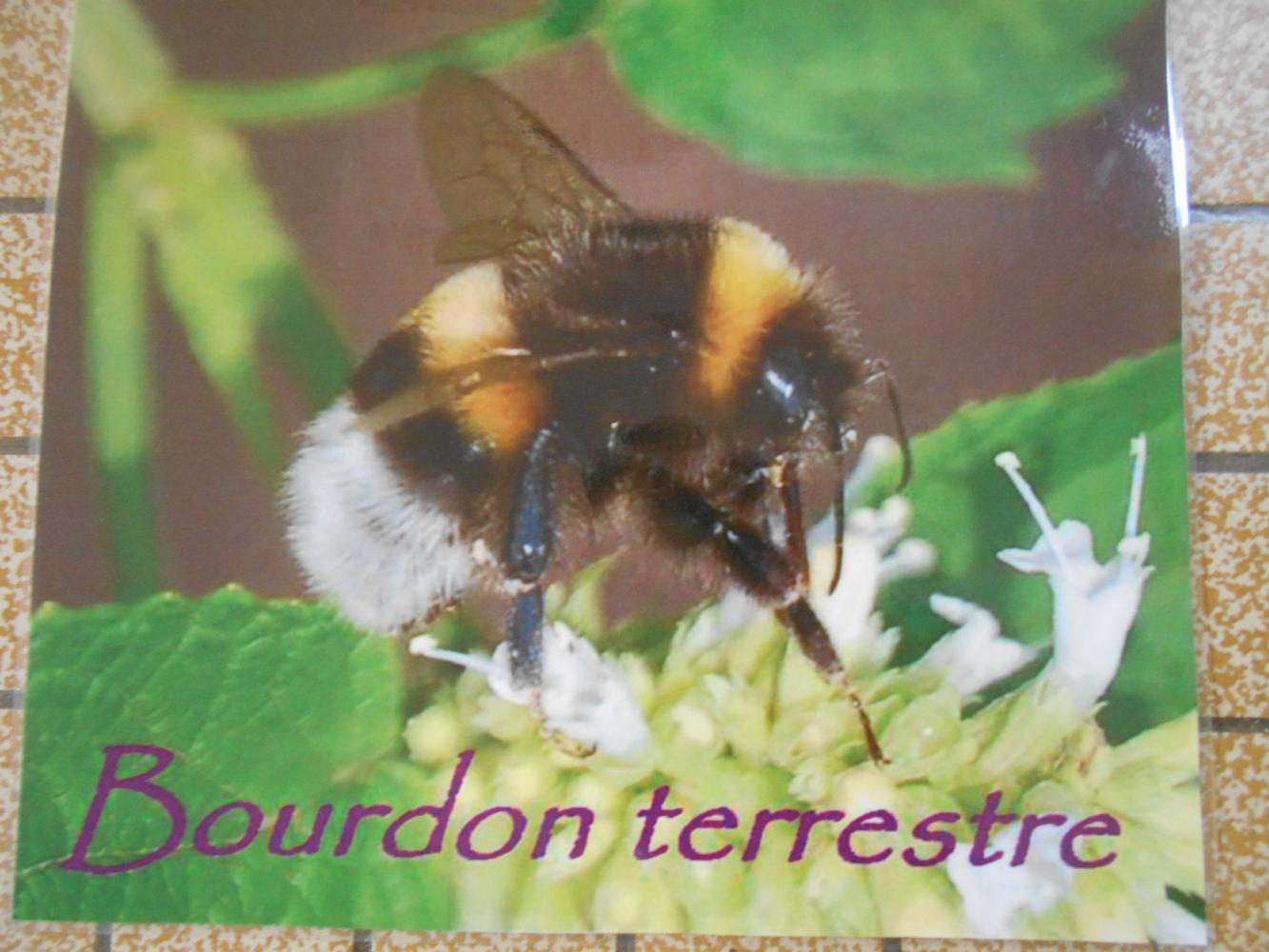 """intervention autour """"des abeilles"""""""