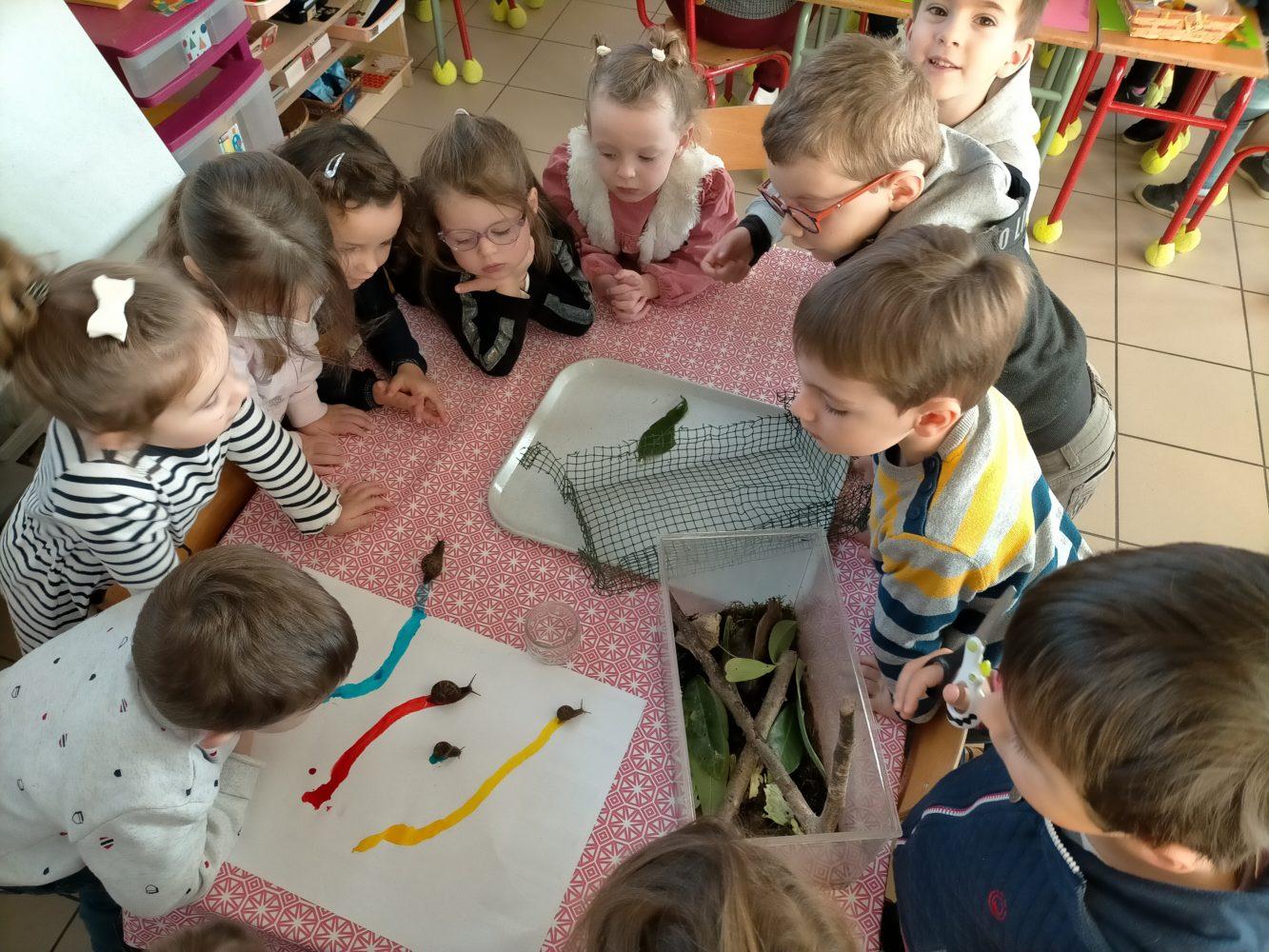 l'arrivée des escargots en classe
